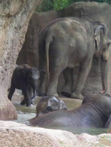 Elephant family.
