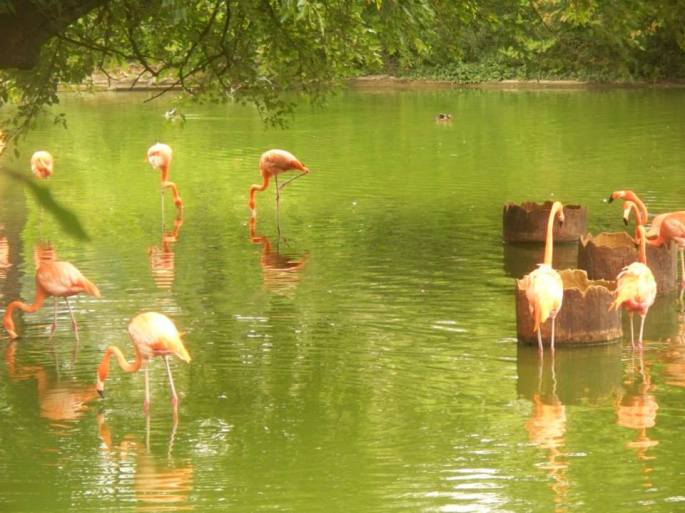 zoo_flamingos