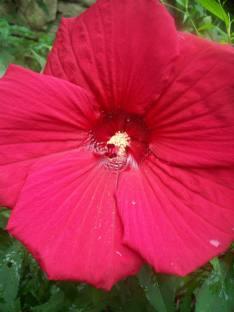 GIANT FLOWER.
